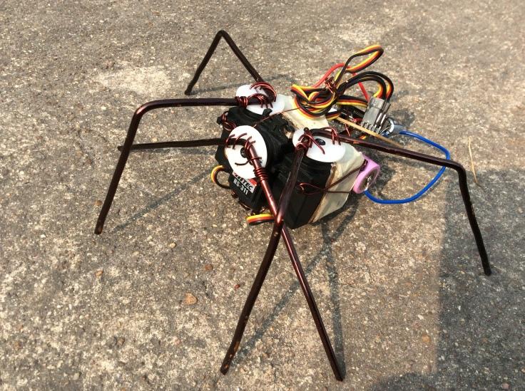 spider pic 003